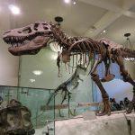NYー世界の中心に、行こう。(7)〜自然史博物館、WHOLE FOODS MARKET、IPPUDO